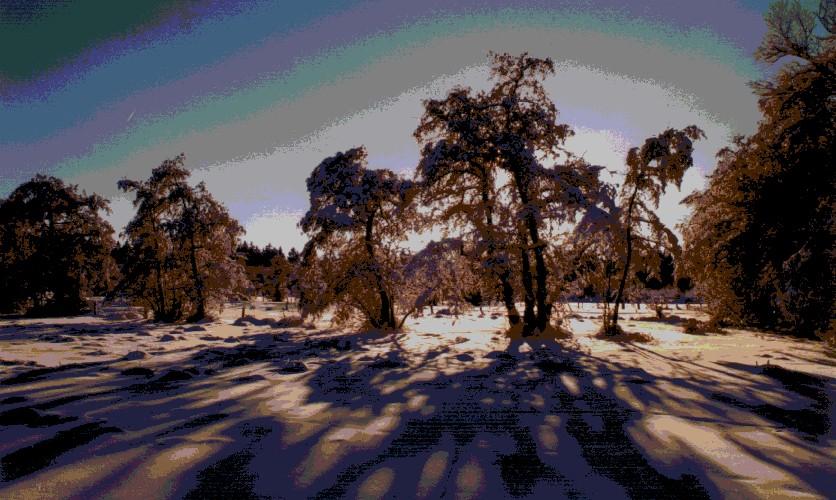 vert_buisson_hiver.jpg