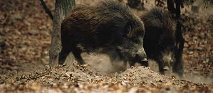FORESTIA  Parc animalier
